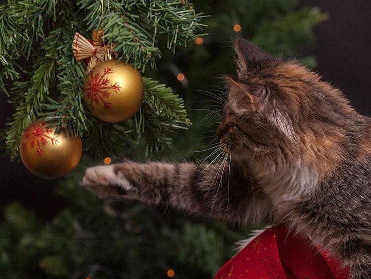 Argos Tree anti gatti