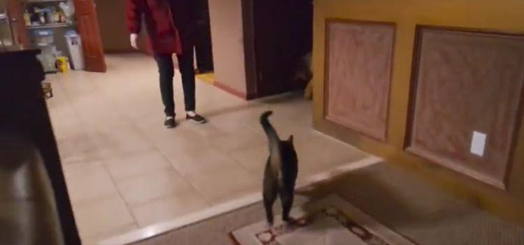Un Gatto Aspetta Lamico Cane Cieco Il Video Dellincontro è