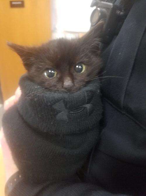 Ciambella gattino Wisconsin