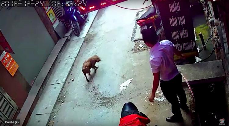 Cane delle fogne Vietnam