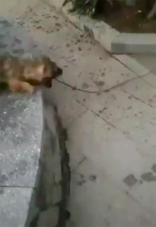 Il cane salva il gatto Turchia