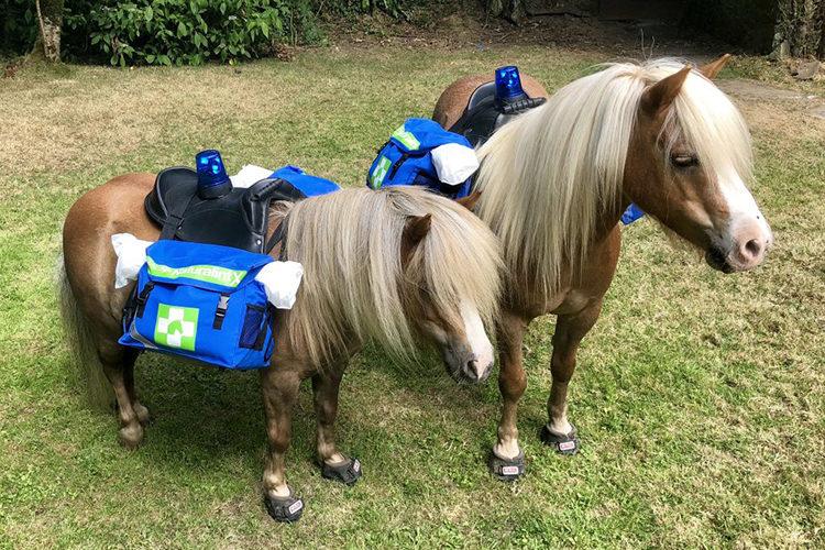 Pony RCP