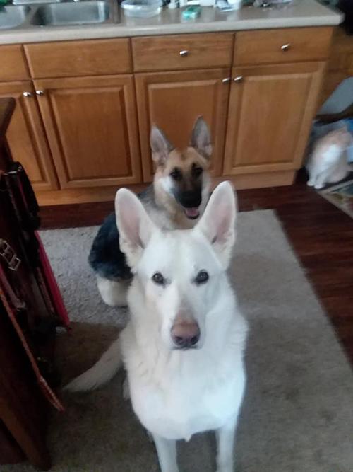 Roxy e Rebel