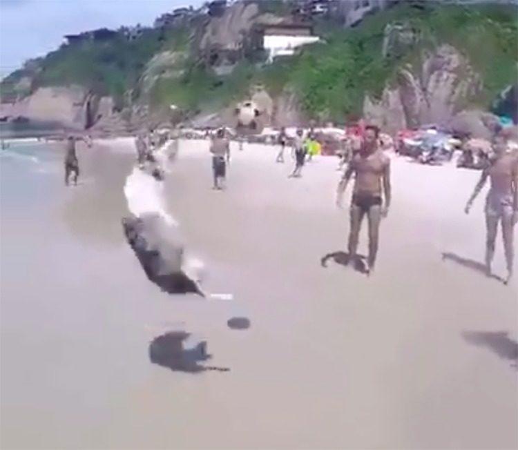 Il cane Scoth gioca a calcio in Brasile