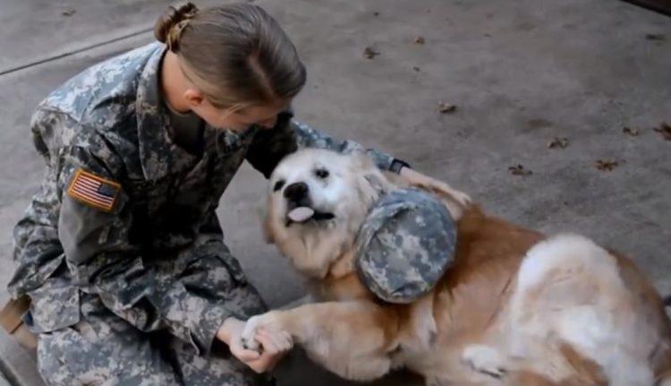 Soldato e il suo cane