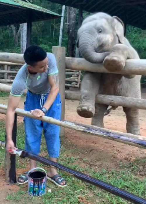 Elefante e guardiano Tailandia