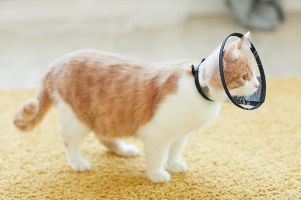 Prevenire pulci e filariosi cardiopolmonare dagli animali domestici